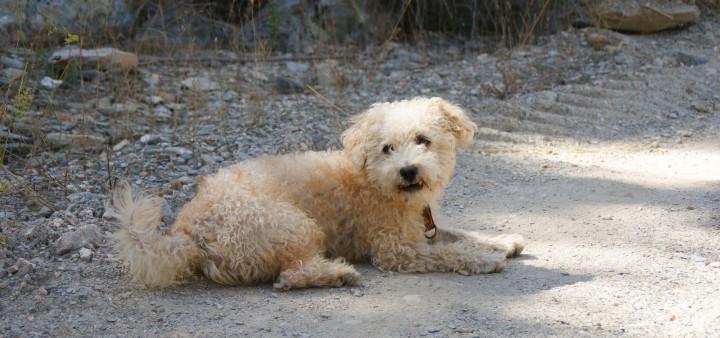 Andalusien Urlaub mit Hund