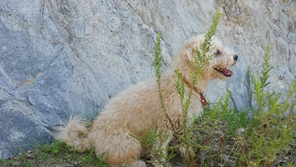Andalusien Reise mit Hund