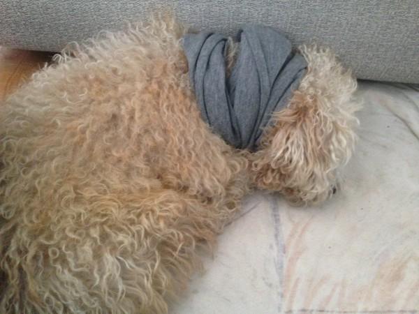 Tierärzte in Andalusien – Chico ist krank