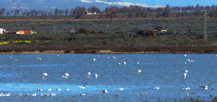Flamingos, Cabo de Gata, Ausglugsziele Almeria