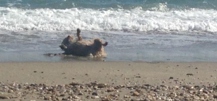 Hund hat Spaß am Strand