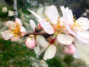 Wanderwege für die Mandelblüte in Andalusien