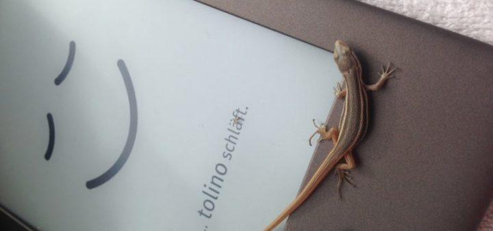Geckos sind äußerst nützlich