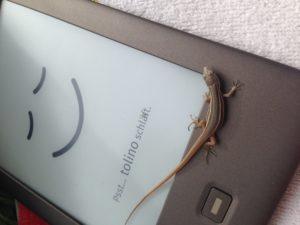 eBook-Reader – Tolino Shine vs. Kindle