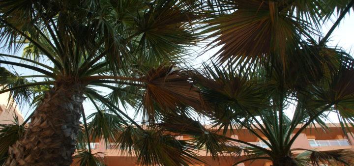 Roquetas de Mar Playa Luna Palmen
