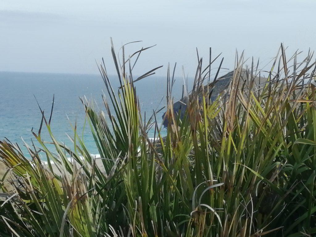 Playa de los Muertos durch Gräser