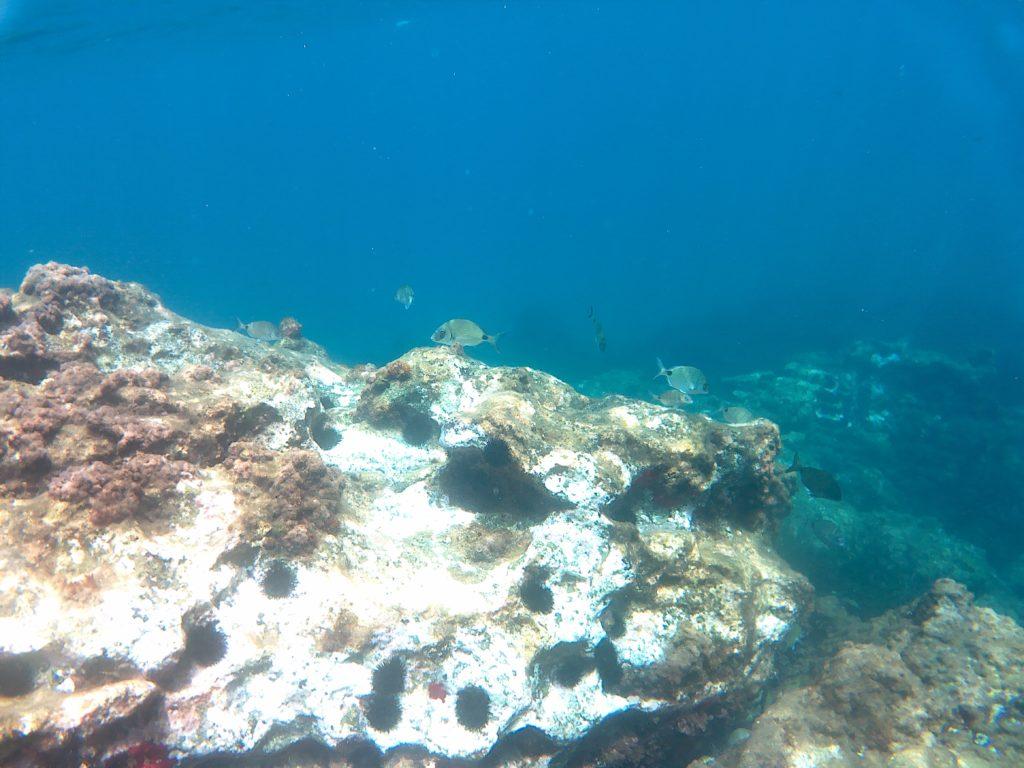 Felsen und Fisch im Wasser