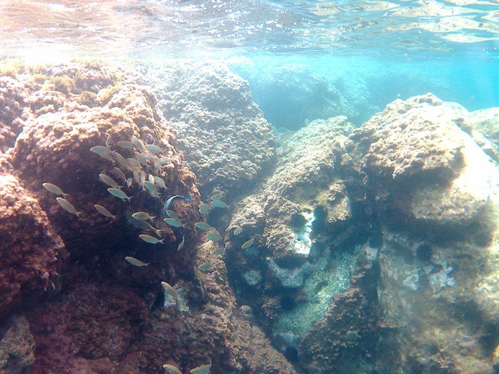 Fische im Wasser an den Stränden in Cuevas del Almanzora