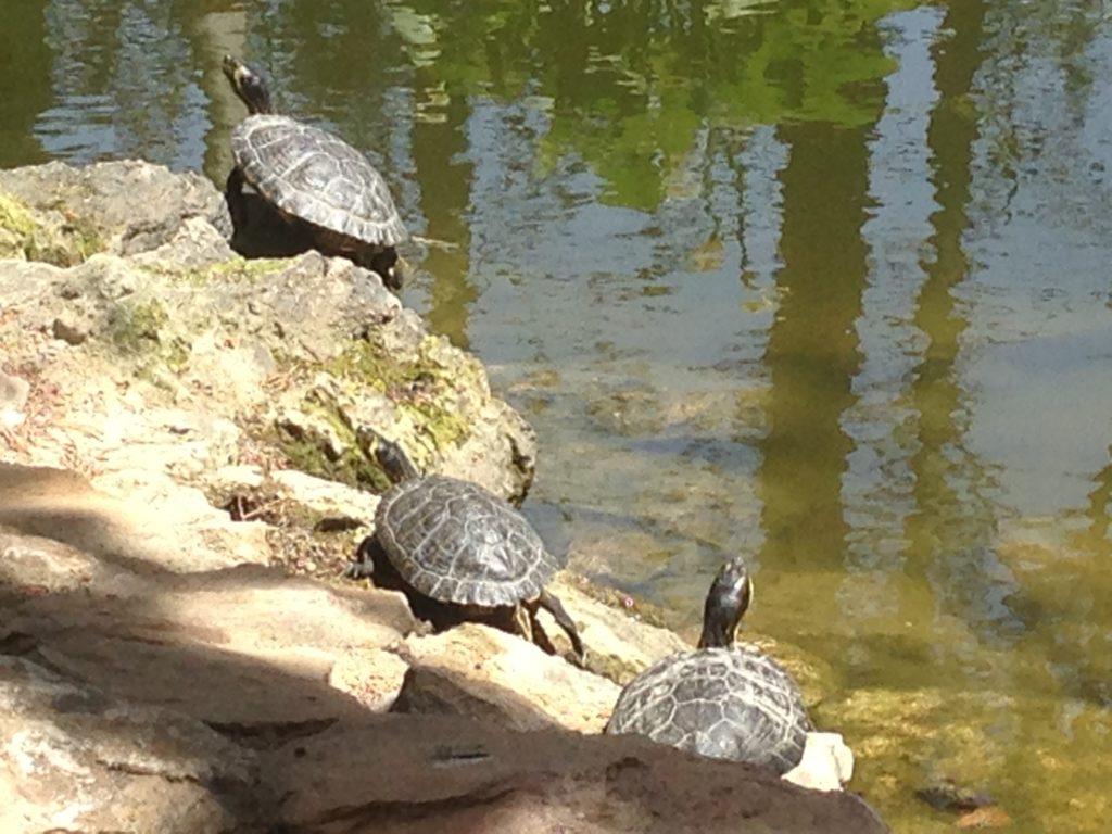 Wasserschildkröten im Stadtpark in Huercal Overa